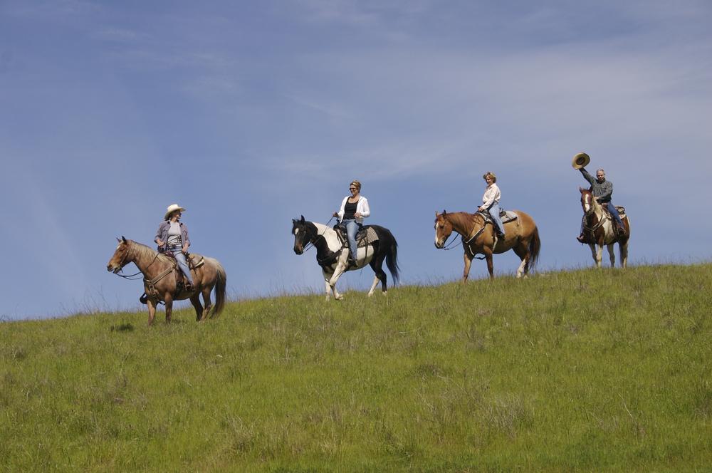 Grapevine Equestrian Tours
